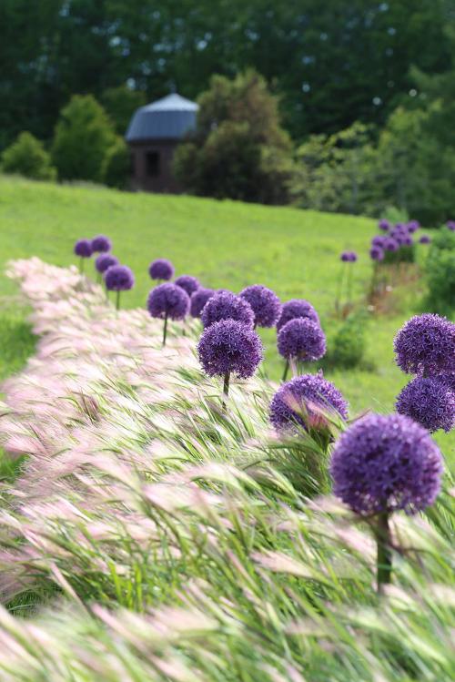 这个暑假,一家人到北海道泷野铃兰丘陵公园避暑旅游吧