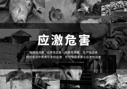 畜牧行业新一代特异性抗应激明星产品