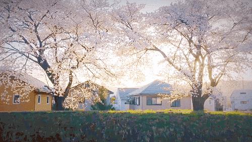 云賞櫻+吃玫瑰,小象健康輕膳美讓你擁有一整個春天!